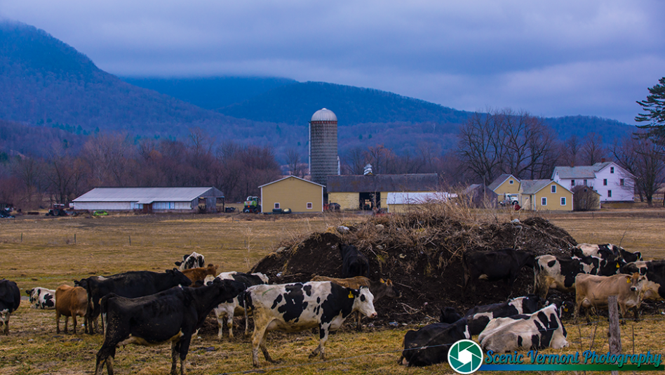 I found another dairy farm in Pawlet Vermont